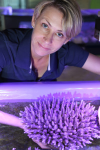 Line Bay of AIMS is part of the international team that found a genetic basis to temperature tolerance in coral. Credit: AIMS